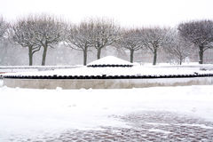 Snowy park trees Stock Photos