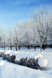 Snowy park in winter. Attractive snowy park in Ukrainian winter with bush row on front side Stock Photography