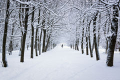 Snowy park in winter Royalty Free Stock Photography