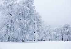 Snowy park3 Fotografie Stock Libere da Diritti