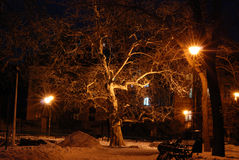Snowy-Parklandschaft Lizenzfreies Stockfoto