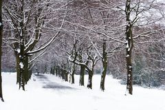 Snowy path Stock Photography
