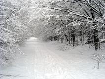 Snowy path. Snowy forest in Hungary at Winter Royalty Free Stock Photos