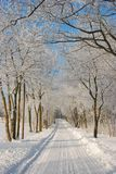 Snowy path Royalty Free Stock Photo