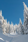 Snowy path. Path among pine trees in the snow Royalty Free Stock Images