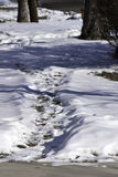 Snowy Path. A snowy path in highlights and shadows among some trees Royalty Free Stock Images