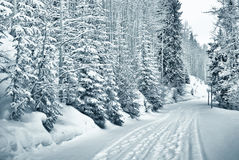 Snowy path 4  of 9. Ski and foot prints trought the snowy forest in vail, colorado Royalty Free Stock Image