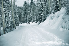 Snowy path 5  of 9. Ski and foot prints trought the snowy forest in vail, colorado Royalty Free Stock Photo