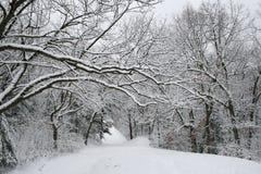 Snowy path Stock Image