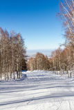 Snowy path through the birch grove Royalty Free Stock Photography