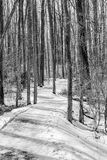 Snowy Path. A snowy path carved out through the forest.  B Royalty Free Stock Image