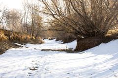 Snowy Path Between Creek Banks with Trees on Either Side Royalty Free Stock Photo
