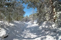 Snowy Path In The Etna Park, Sicily. Snowy path through winter pine woods in the Etna Park, Sicily stock photos
