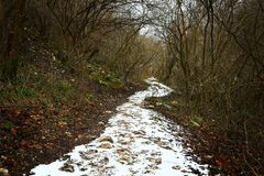 Snowy path through the forest royalty free stock photo