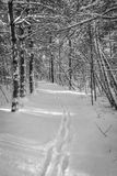 Snowy path in the forest stock photography
