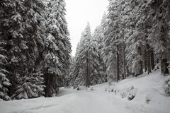Snowy path in the forest Royalty Free Stock Photography
