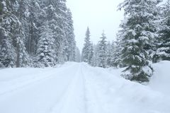 Snowy path. Forest road in winter. Stock Photos
