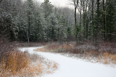 Snowy Path Royalty Free Stock Photography