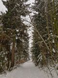 Snowy path in the forest during winter royalty free stock images