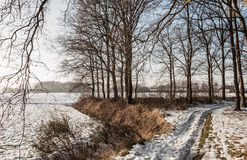 Snowy path between leafless trees in wintertime Stock Photos