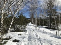 Snowy path lined with trees and rocks stock photo