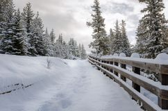 Snowy Path Lined with a Wooden Fence Stock Photography