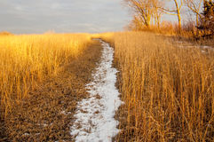 Snowy path royalty free stock photos