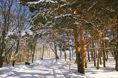 Snowy path in a park with trees. Photo Royalty Free Stock Photography