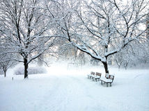 Snowy path. The real winter in the city park, benches  along the path Royalty Free Stock Photos