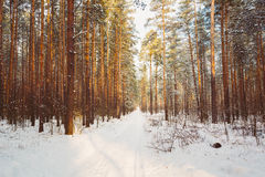 Snowy Path, Road, Way Or Pathway In Winter Forest Royalty Free Stock Photos