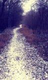 Snowy path throug the forrest Stock Photo