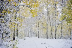 Snowy Path Less Travelled. Early snowfall in the Wasatch Mountains Royalty Free Stock Photo