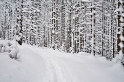 Snowy path. Path between trees in snowy forest stock photography