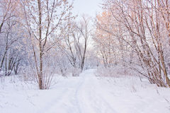 Snowy path through the trees in park Royalty Free Stock Photography