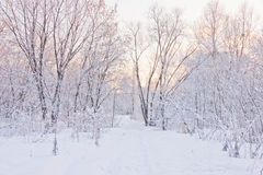 Snowy path through the trees in winter. Park royalty free stock photo