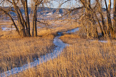Snowy Path Between Two Cottonwoods Stock Image
