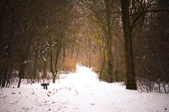 Snowy path in winter. With a bench Stock Image