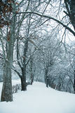 Snowy path in winter Royalty Free Stock Photography