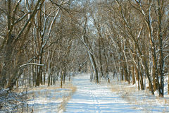 Snowy path in woods. Path through woods in winter; Homestead National Monument of America, Beatrice, Nebraska Royalty Free Stock Photography