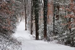 A Snowy Path through the Woods stock image
