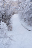 Snowy Pathway 3 Royalty Free Stock Photography