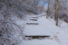 Snowy Pathway Royalty Free Stock Photo