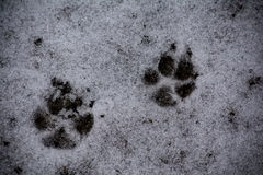 Snowy Paws Royalty Free Stock Photography