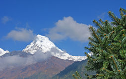 Snowy peak. Snowy peak on the background of blue sky and fluffy pine Stock Image