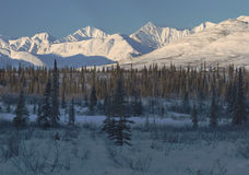 Snowy peaks of Alaska range. 9 image composite of snowy peaks in ALaska range with highland forest in the foreground Stock Photography