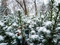 Snow Pines Blur Winter Focus stock images