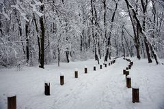 Snowy-Pfad stockbilder