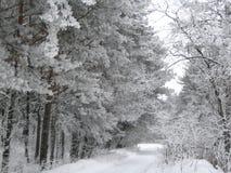 Snowy-Pfad Stockfoto