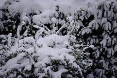 Snowy pflanzt Hintergrund und Beschaffenheit Lizenzfreies Stockfoto