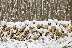 Snowy Pile Of Tree Logs Royalty Free Stock Images